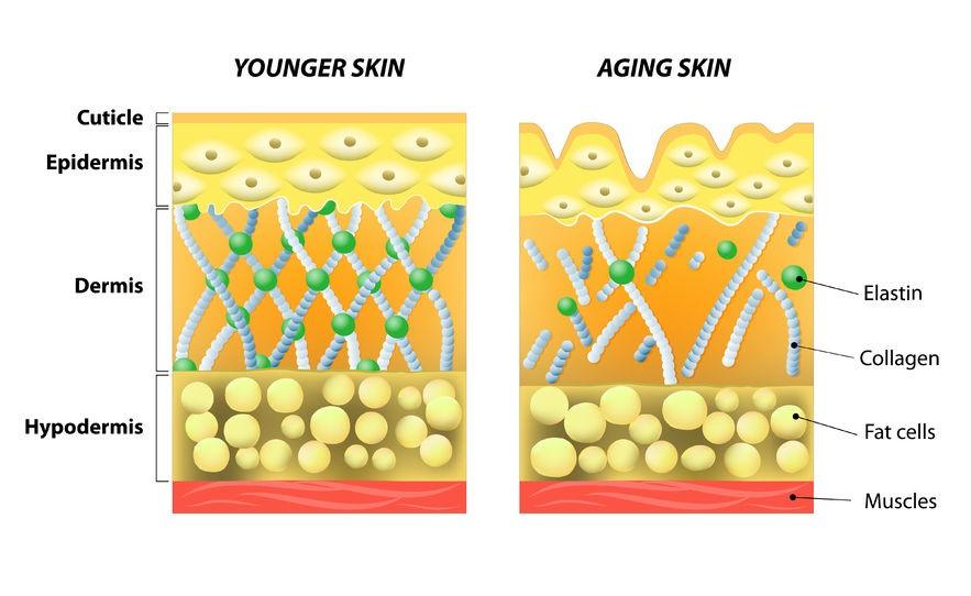 پوست در طول زمان
